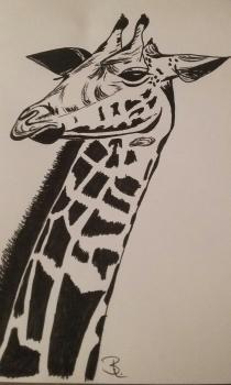 Giraffe schwarz weiß A5
