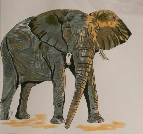 Elefant A4