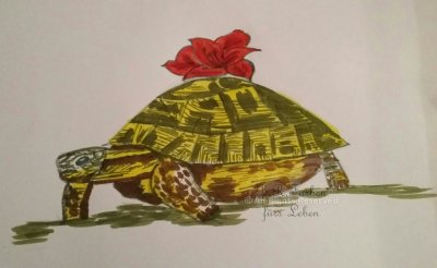 Schildkröte - unverkäuflich