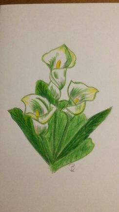 Calla Buntstift A5