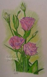 Blumen Buntstift A4