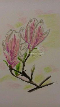 tulpenmagnolie A4