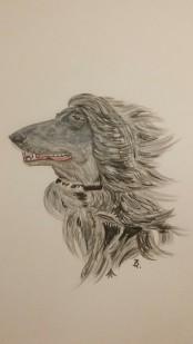Windhund A5