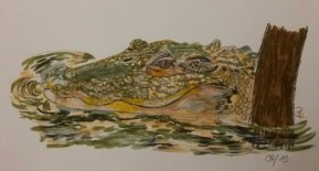 Krokodil Kunstdruck