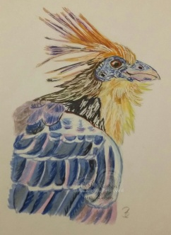 Zigeunervogel Porträit A4