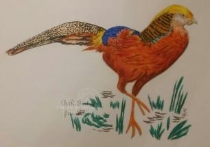 Goldfasan A5 (A4)
