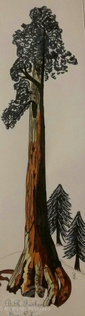 Mammutbaum - A4 schmal