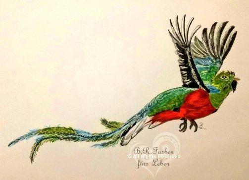 Quetzal A4 Druck