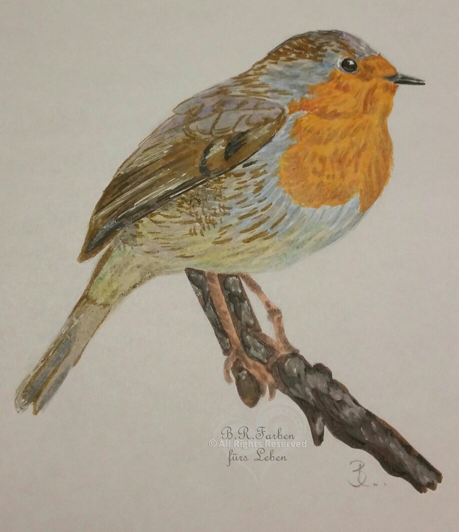 18 Rotkehlchen Zeichnung Bleistift - Besten Bilder von ausmalbilder