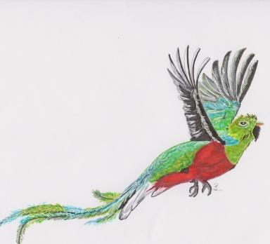 Quetzal A4