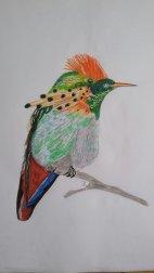 Kolibri A4
