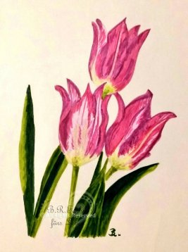 Tulpen A4