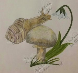 Weinbergschnecke auf Pilz