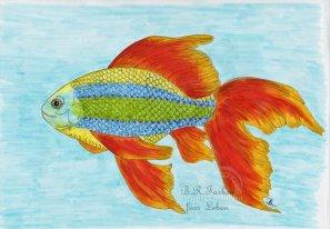 Regenbogenfisch
