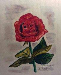 Rose Aquarelle