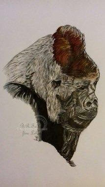 Gorilla A5