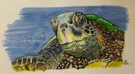 Meeresschuldkröte A5