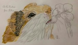 Hamster A4
