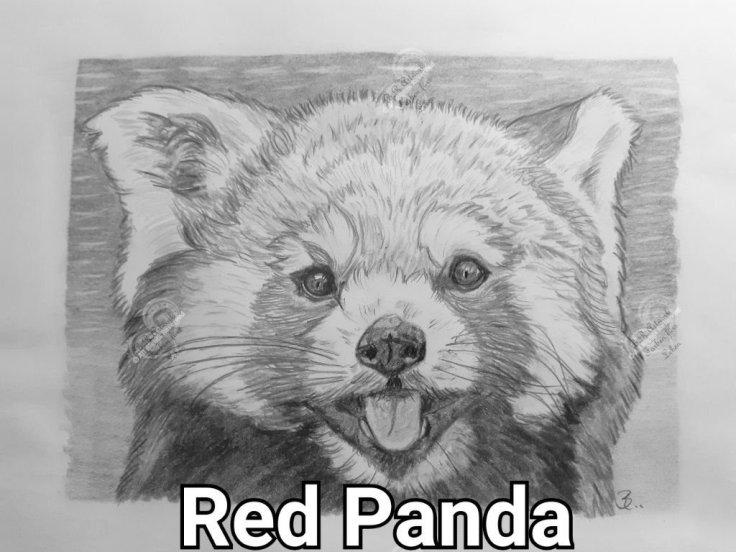 Roter Panda A4