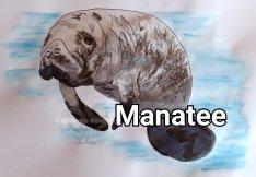 Manatee A4